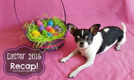 A Recap of our Easter Weekend!
