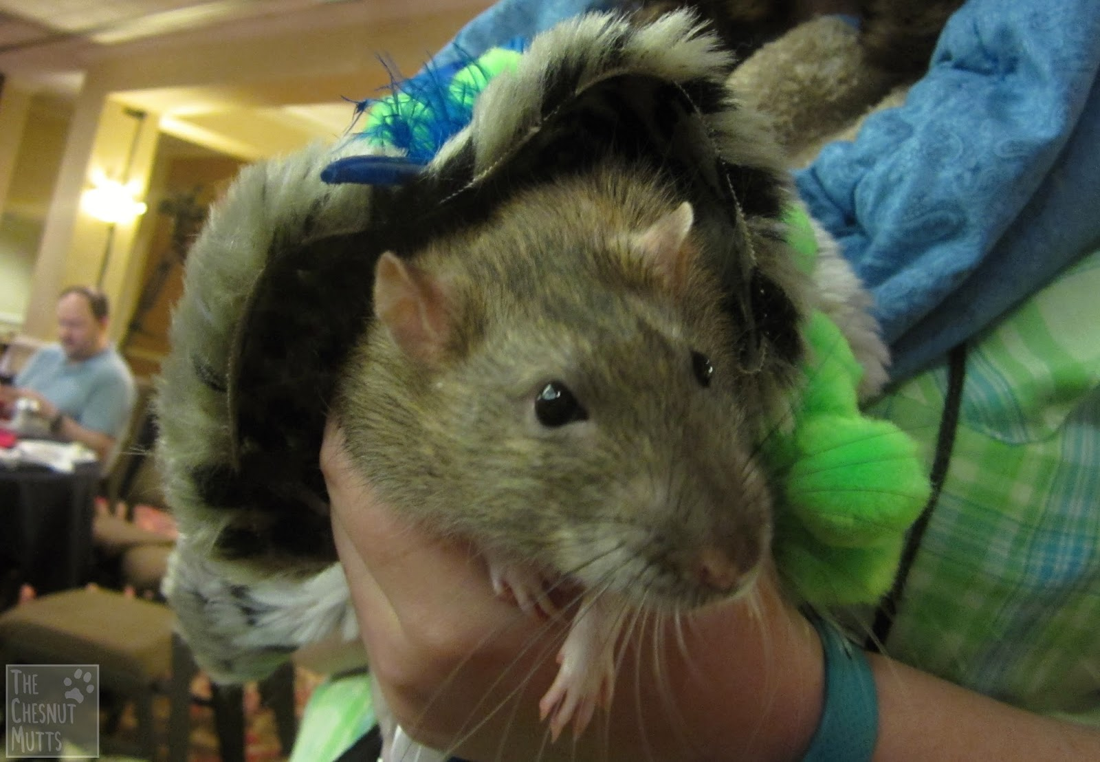 5 Types of People Who Should Attend the BlogPaws 2016 Conference