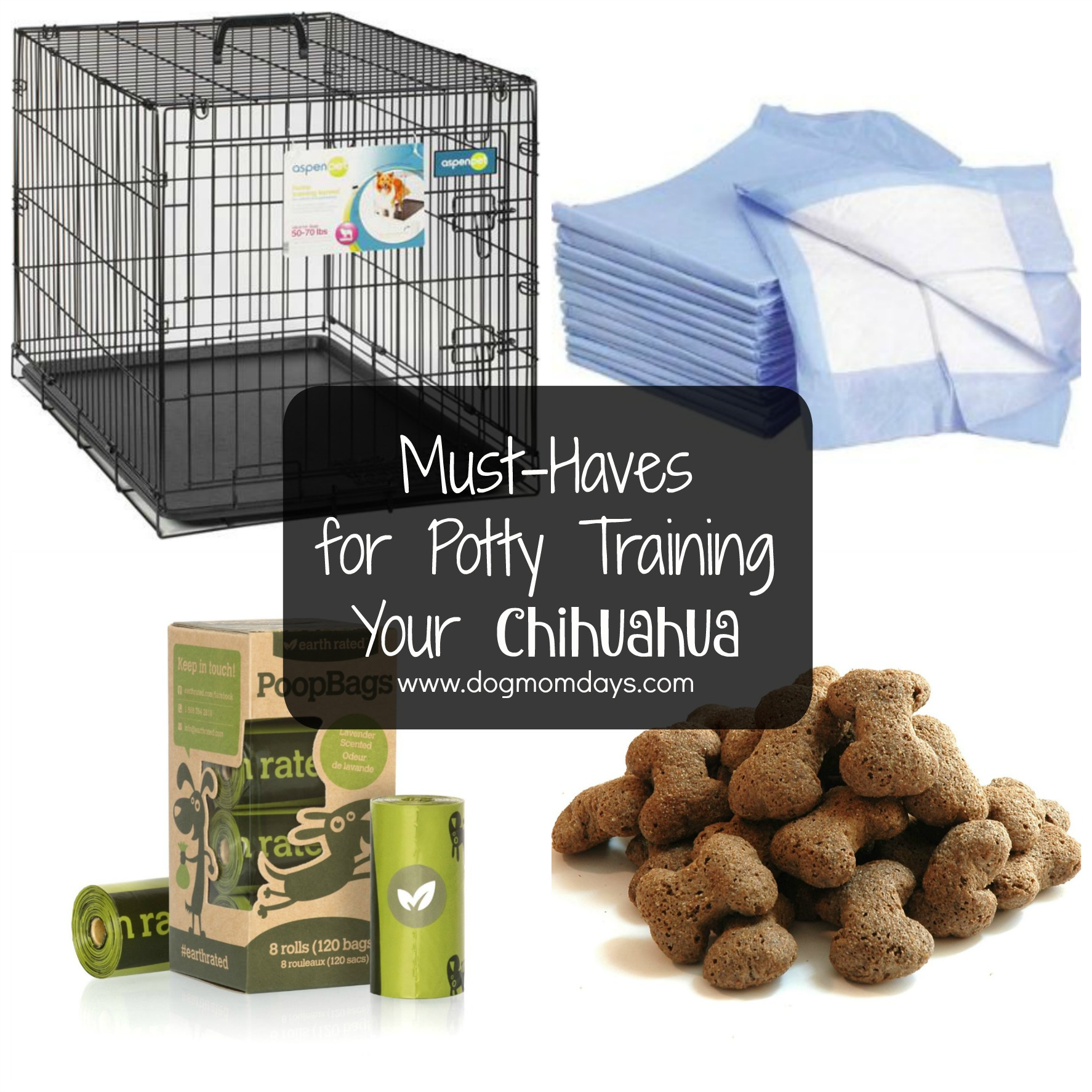 10 Tips for Effectively Potty Training Your Chihuahua