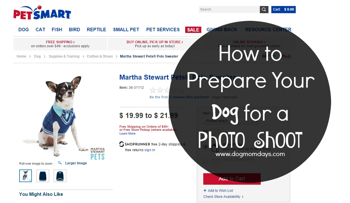 How to Prepare Your Dog for a Photo Shoot