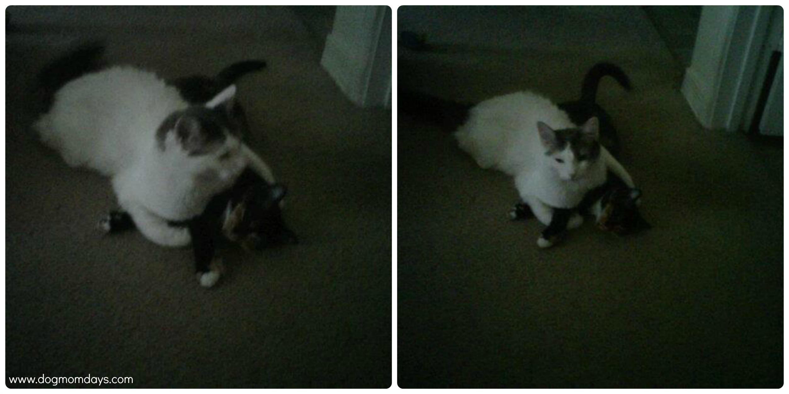 Stray Cat Keeps Running Away