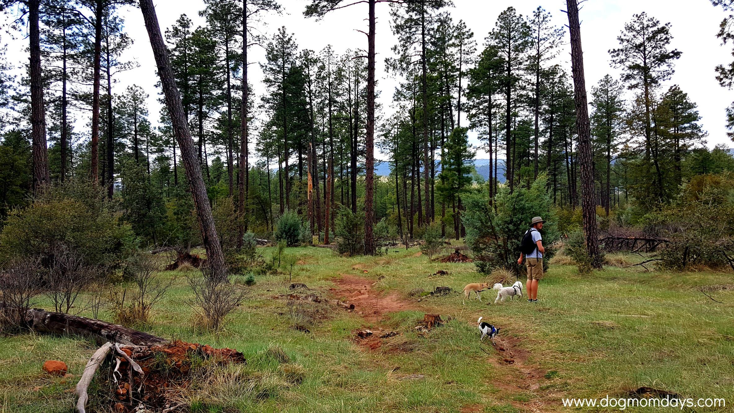 Pine Trailhead