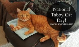 Happy National Tabby Day! #NationalTabbyDay
