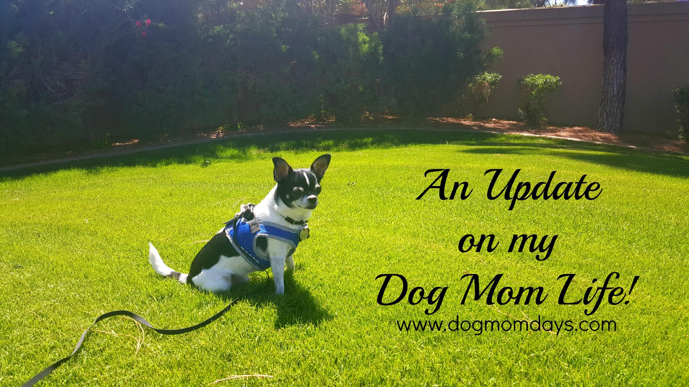 dog mom life