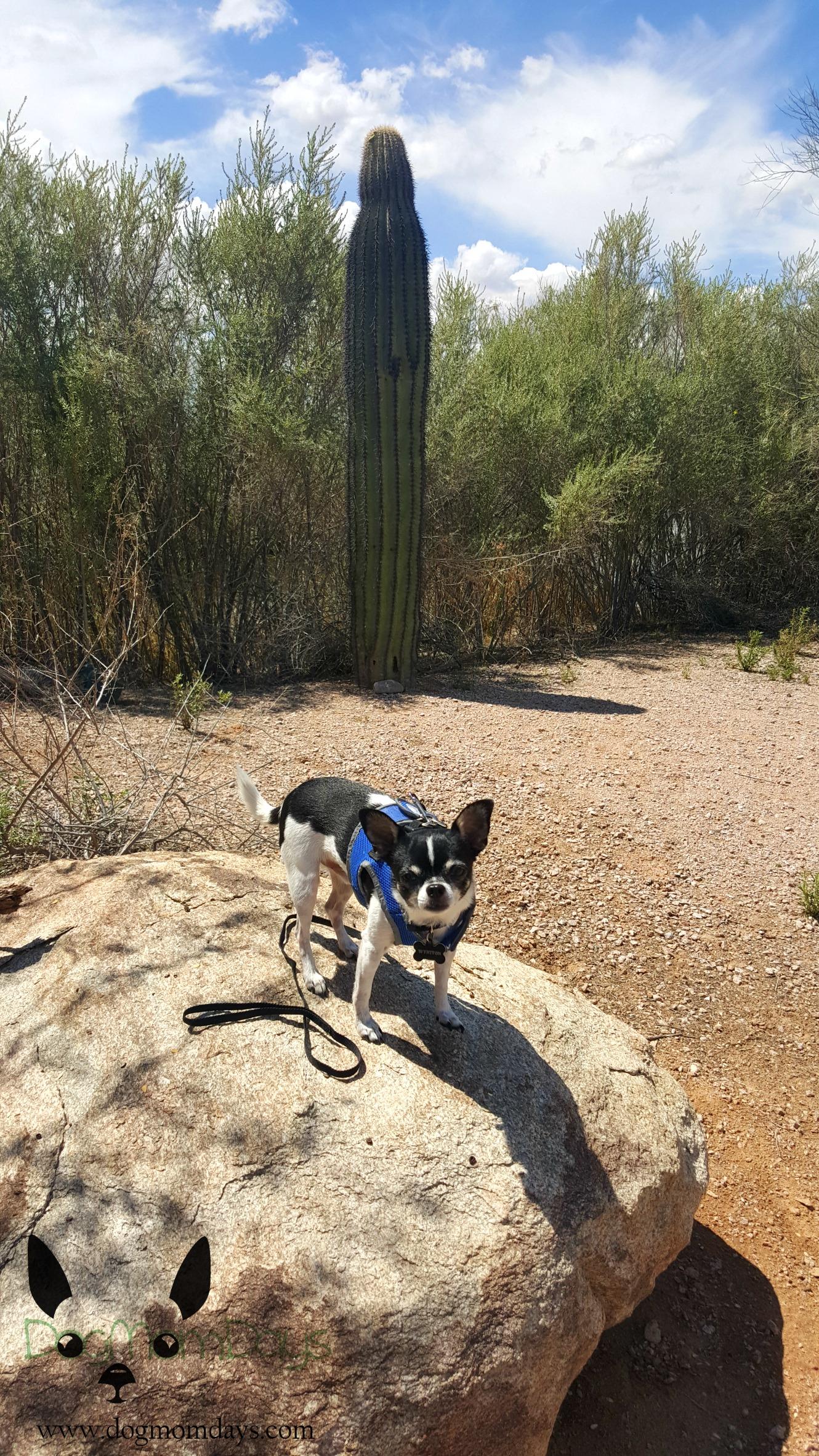 Wild Horse Pass Interpretive Trail