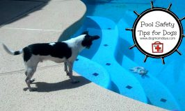 Pool Safety Tips for Dogs: Staying Safe in the Summer