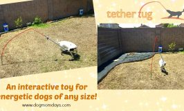 Have an energetic dog with high toy drive? Tether Tug is for them!