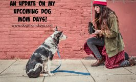 An Update on my Upcoming Dog Mom Days