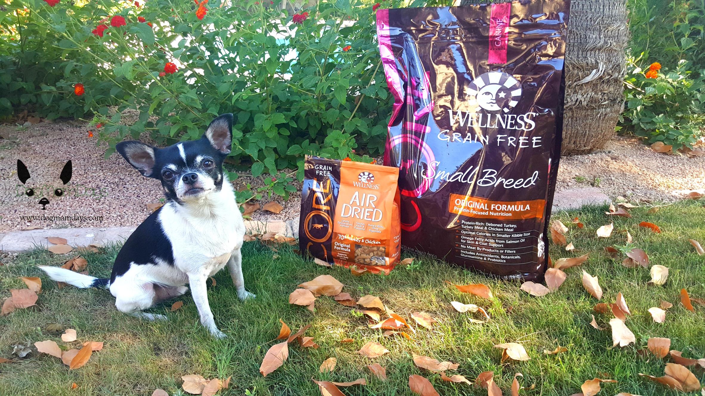 Wellness grain-free dog food