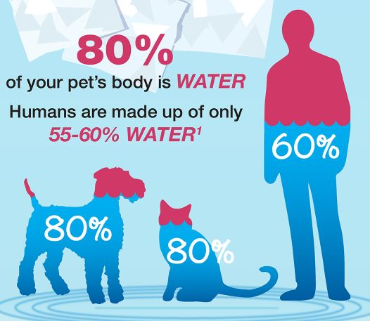 Pet Hydration Month