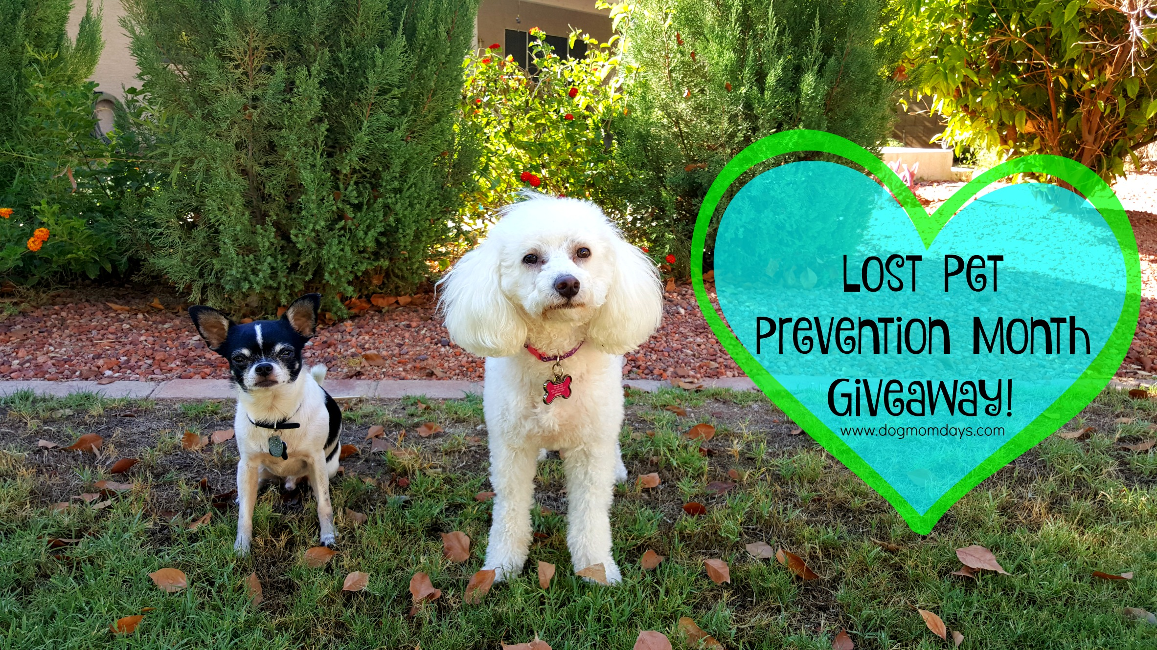 Lost Pet Prevention Month