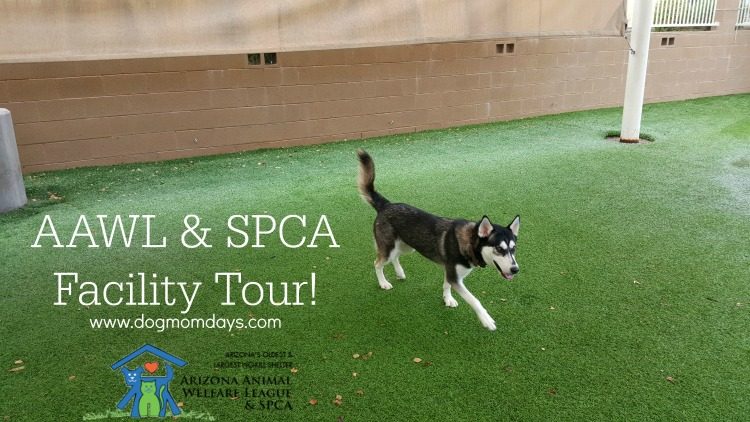 I Toured the AAWL & SPCA Shelter!