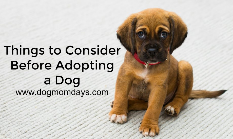 I want to adopt a dog…but where do I start?