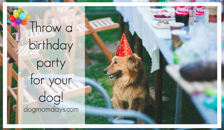 11 Steps to Throwing a Birthday Party for Your Dog