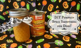 Recipe: DIY Pumpkin Spice Smoothies For Dogs