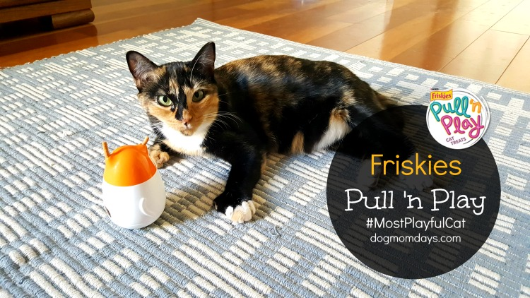 Spice Up Your Cat's Playtime With the Friskies Pull 'n Play #MostPlayfulCat