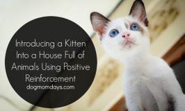 Introducing a Kitten Into a House Full of Animals