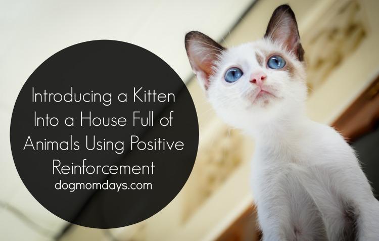 introducing a kitten