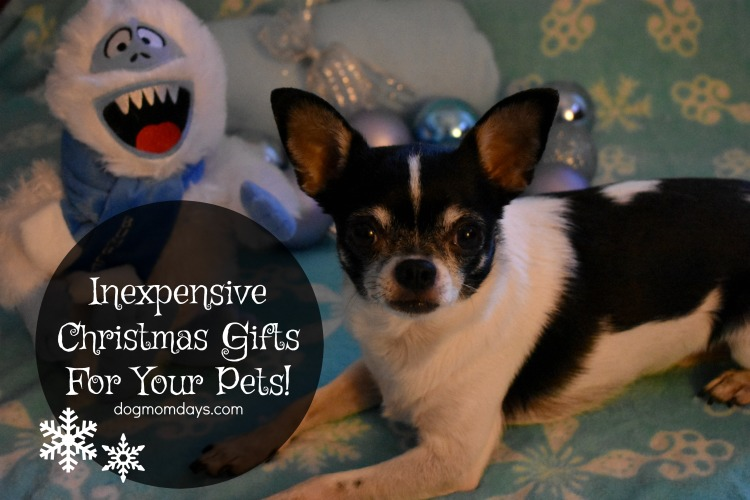 Christmas gifts for your pet