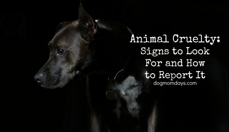 suspect animal cruelty