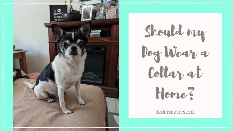 should my dog wear a collar at home