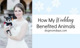 How My Wedding Benefited Animals