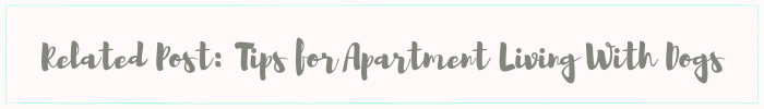 tips for apartment living with dogs