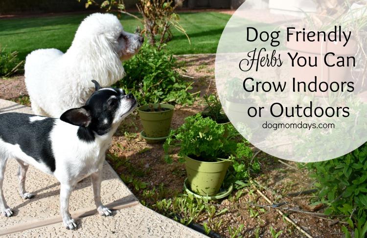 dog friendly herbs