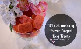 DIY Strawberry Frozen Yogurt Dog Treats