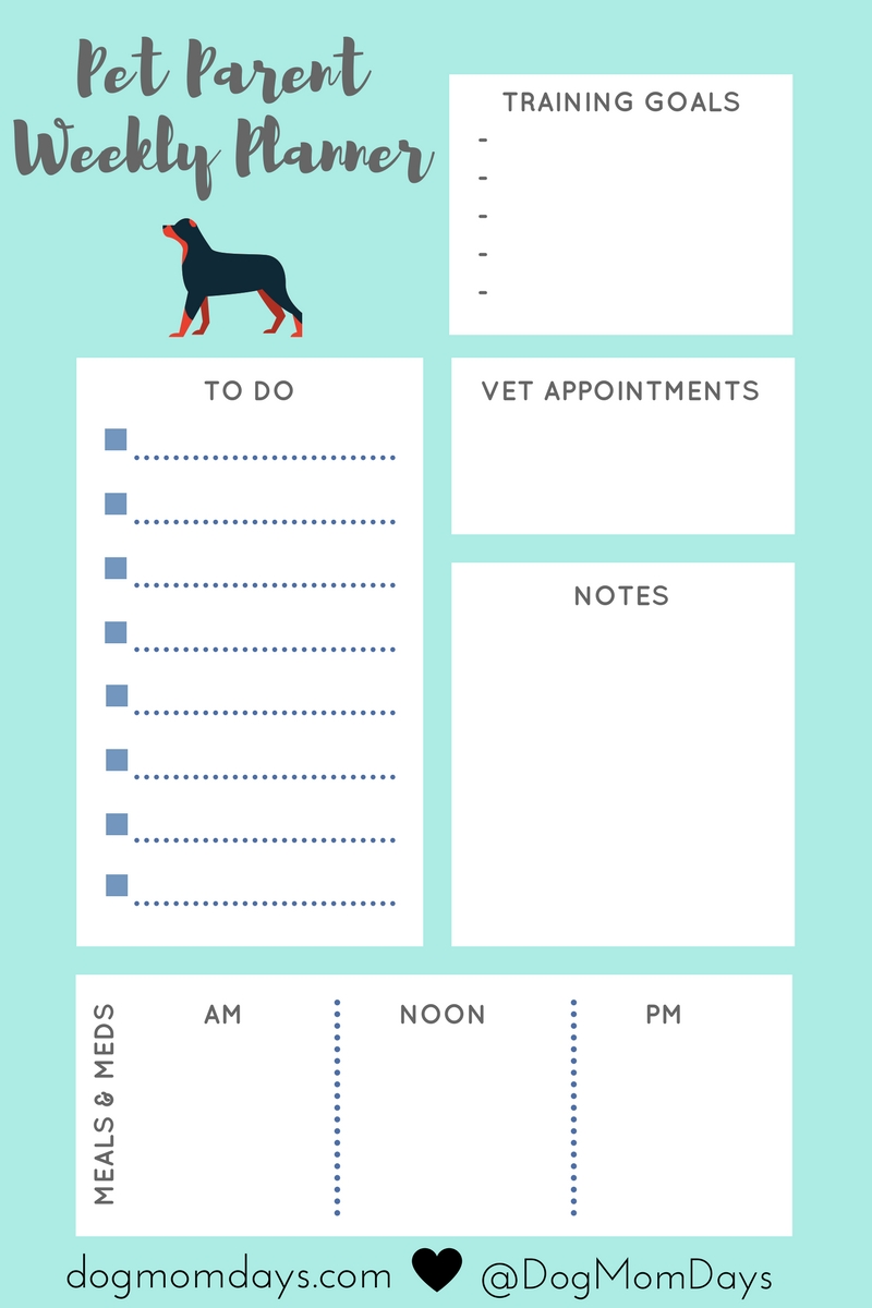schedule for your dog