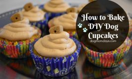 How to Bake DIY Doggie Cupcakes