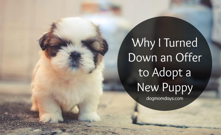 adopt a new puppy