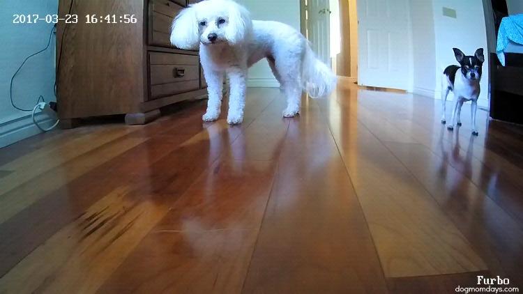 Furbo pet camera screenshot