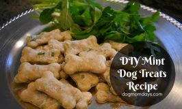 Homemade Mint Dog Treats Recipe