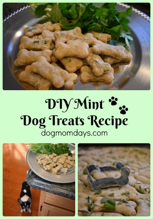 homemade mint dog treat recipe