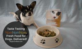 Black and white Chihuahua taste testing NomNomNow