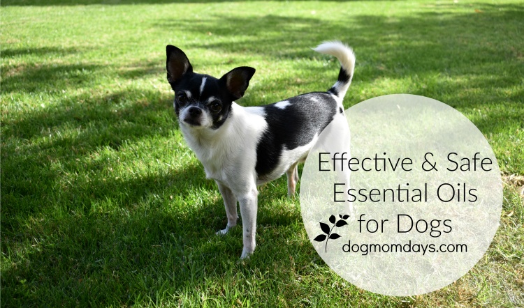 effective and safe essential oils for dogs