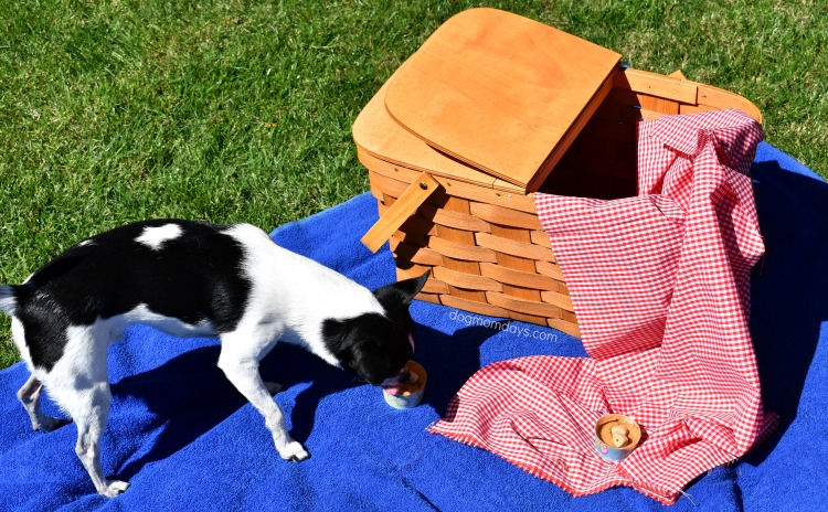 budget friendly activities to do with your dog