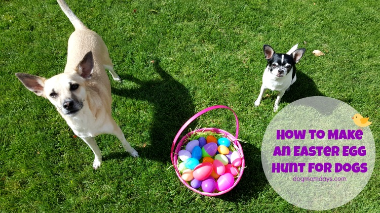How to Make an Easter Egg Hunt for Dogs - Dog Mom Days