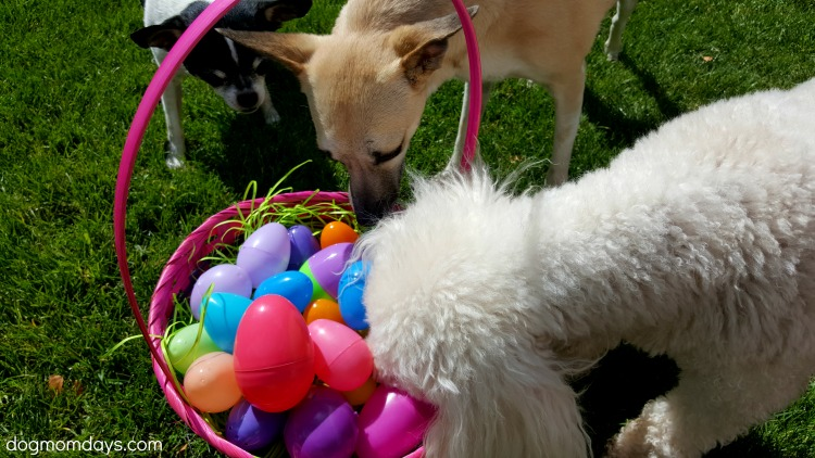 How to make an Easter egg hunt for dogs