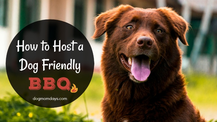 How to host a dog friendly BBQ