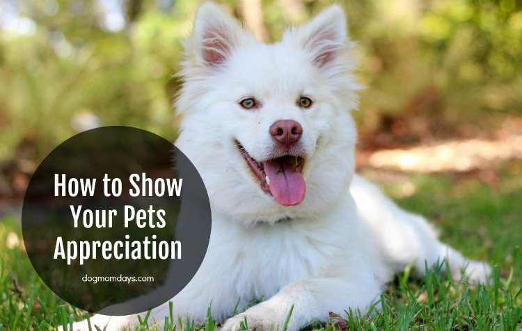 how to show your pets appreciation