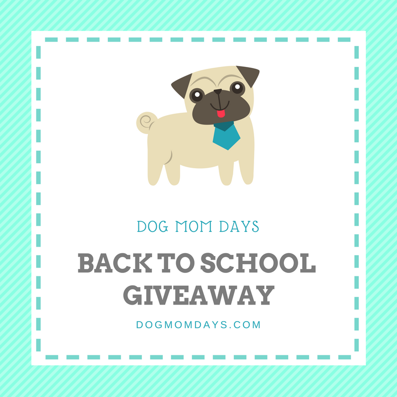 back to school for dogs