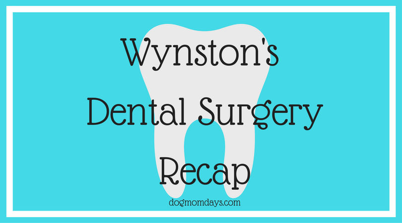 Wynston's dental surgery recap