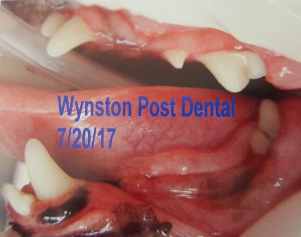 Wynston's dental surgery recap