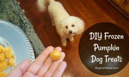 DIY 2-Ingredient Frozen Pumpkin Dog Treats