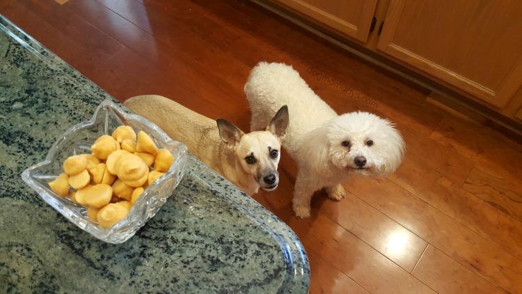 frozen pumpkin dog treats