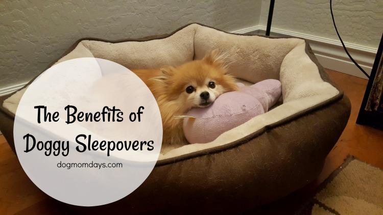 doggy sleepovers