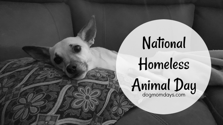 National Homeless Animal Day