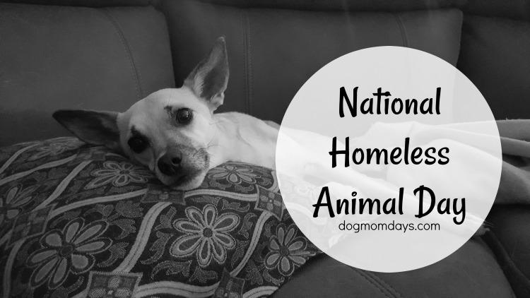 National Homeless Animal Day